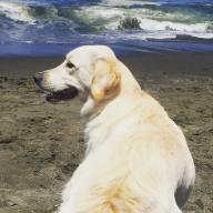 sadie beach