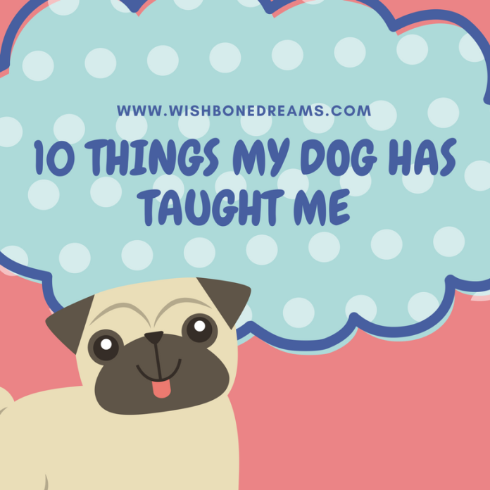 10 things my dog has taught me